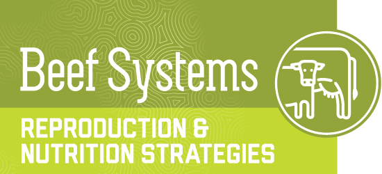 beef systems - reproduction and nutrition strategies