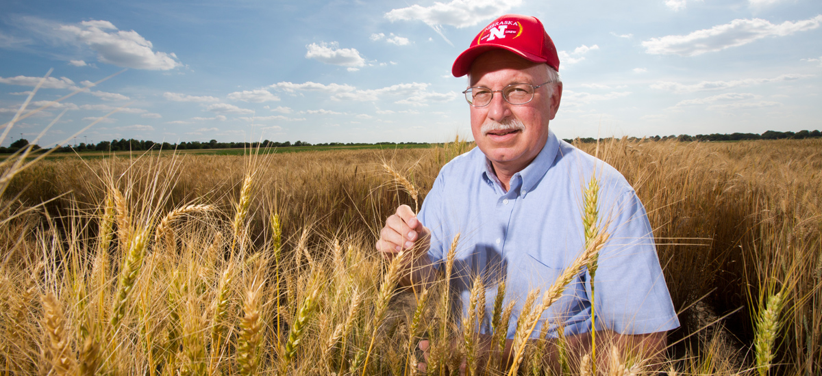 Stephen Baenziger holding a stem of wheat in a field