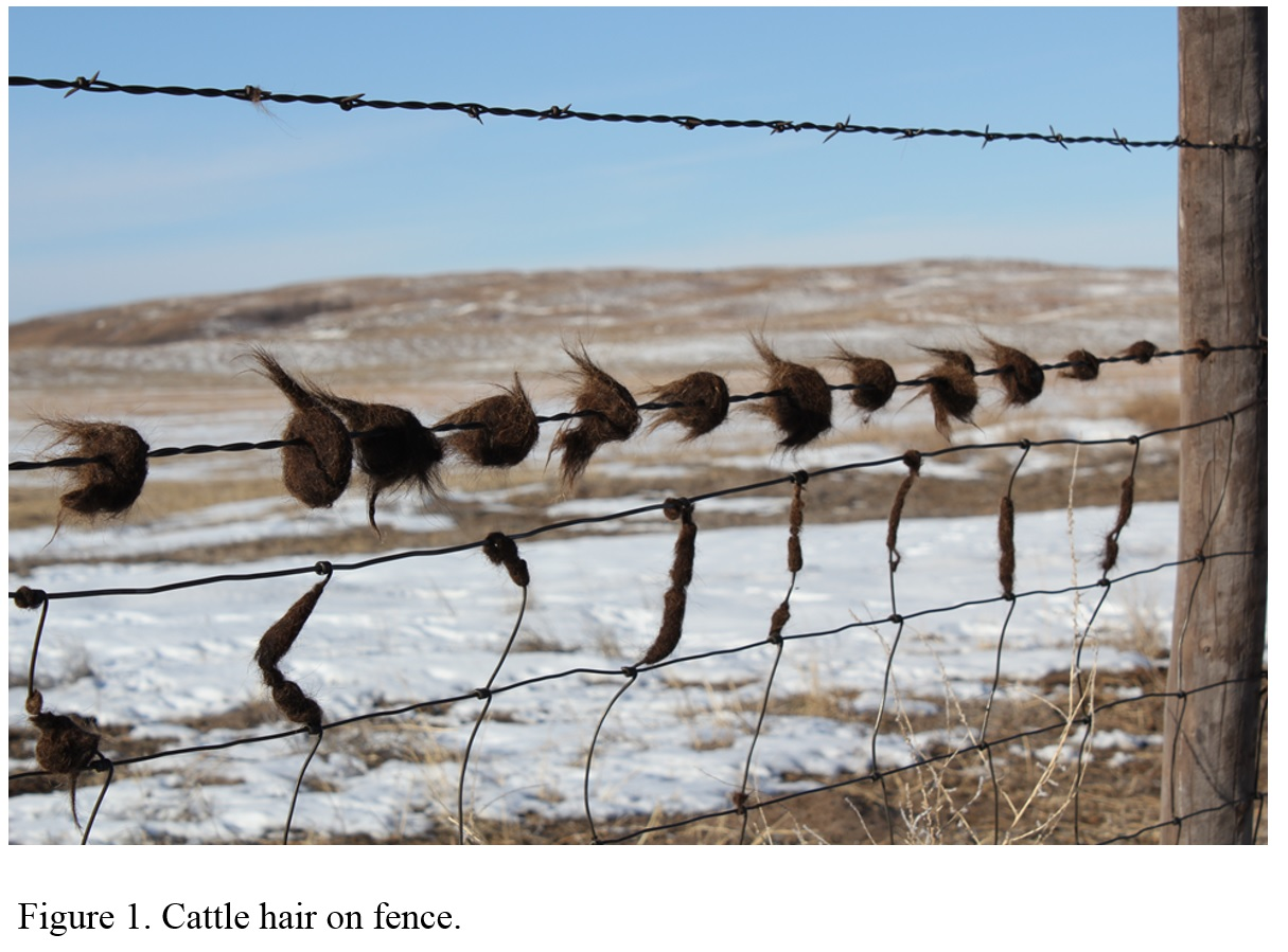 photo of cattle hair left on fence from rubbing