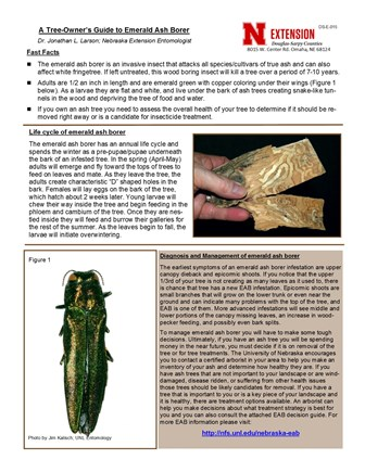 A Tree-Owner's Guide to Emerald Ash Borer