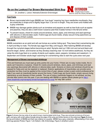 Be on the Lookout for Brown Marmorated Stink Bug