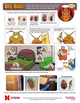 Bed Bugs (English)