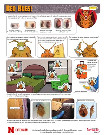 Bed Bugs (Spanish)