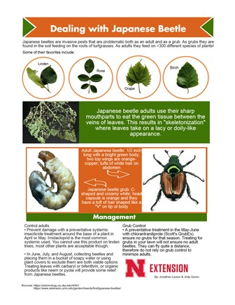 Dealing with Japanese Beetle)
