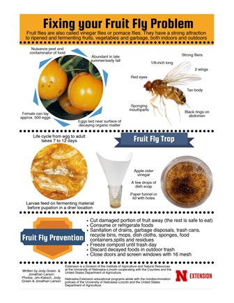 Fixing your Fruit Fly Problem