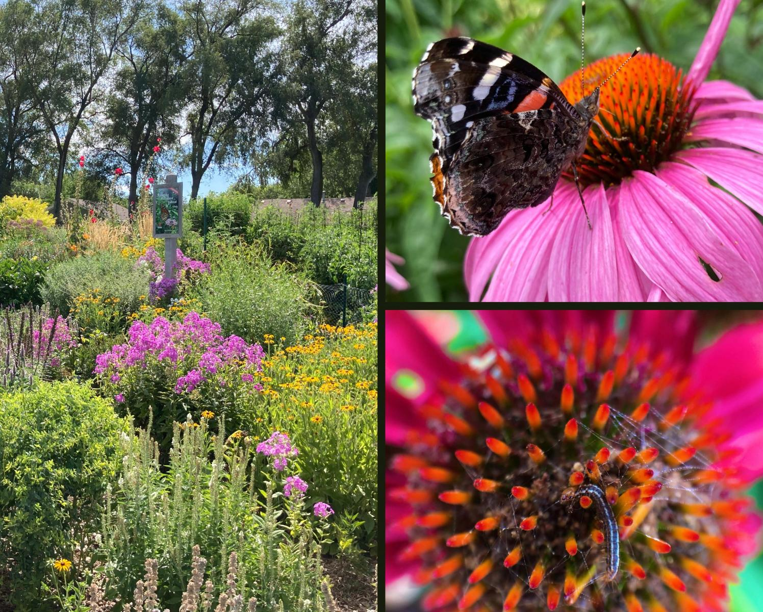 Flower Garden Insects