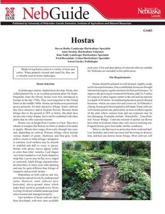 Hostas (G1683)