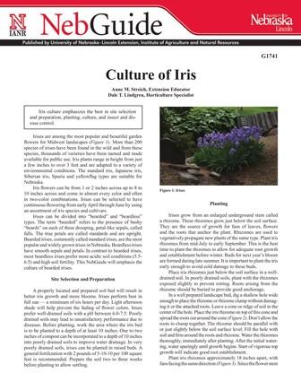 Culture of Iris (G1741)