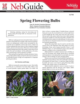 Spring Flowering Bulbs (G1742)