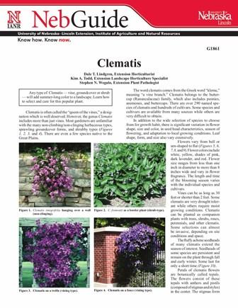 Clematis (G1861)