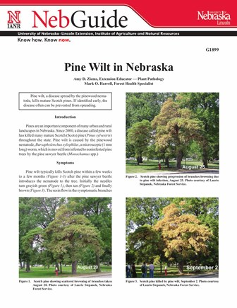 Pine Wilt in Nebraska (G1899)