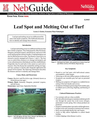 Leaf Spot and Melting Out of Turf (G1915)