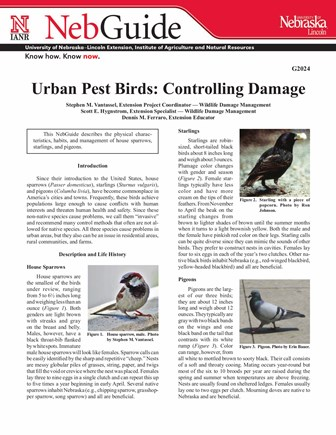 Urban Pest Birds (G2024)