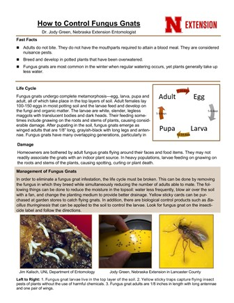 How to Control Fungus Gnats