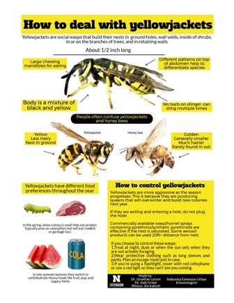 How to deal with yellowjackets