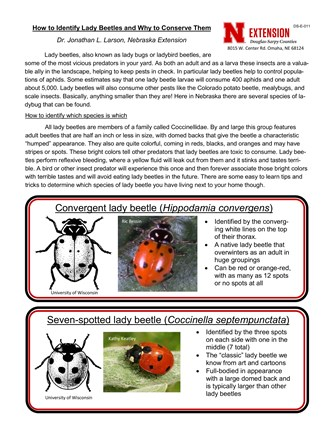 How to Identify Lady Beetles and Why to Conserve Them