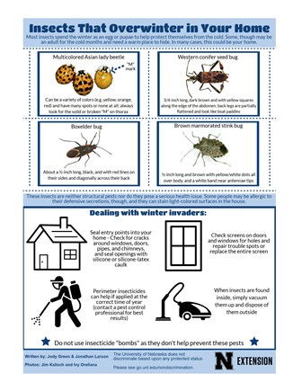 Insects That Overwinter in Your Home
