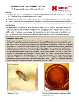 Itty-Bitty Invaders: How to Deal with Fruit Flies