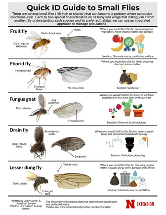 Quick ID Guide to Small Flies!