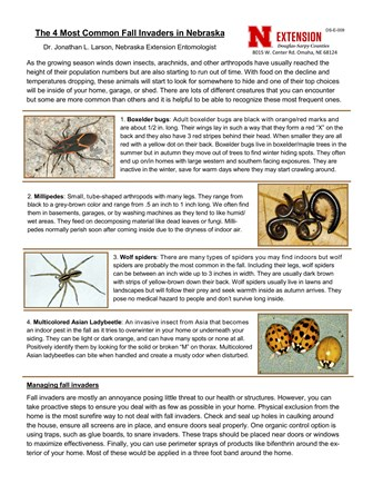 The 4 Most Common Fall Invaders in Nebraska