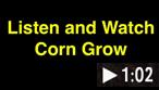 Video - Sep. 14, 2016 - Hear Corn Grow