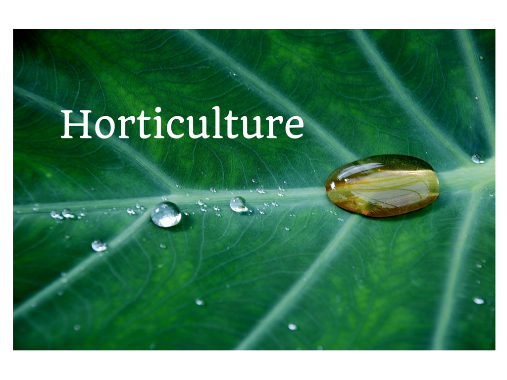 Horticulture Rain Drop on Leaf