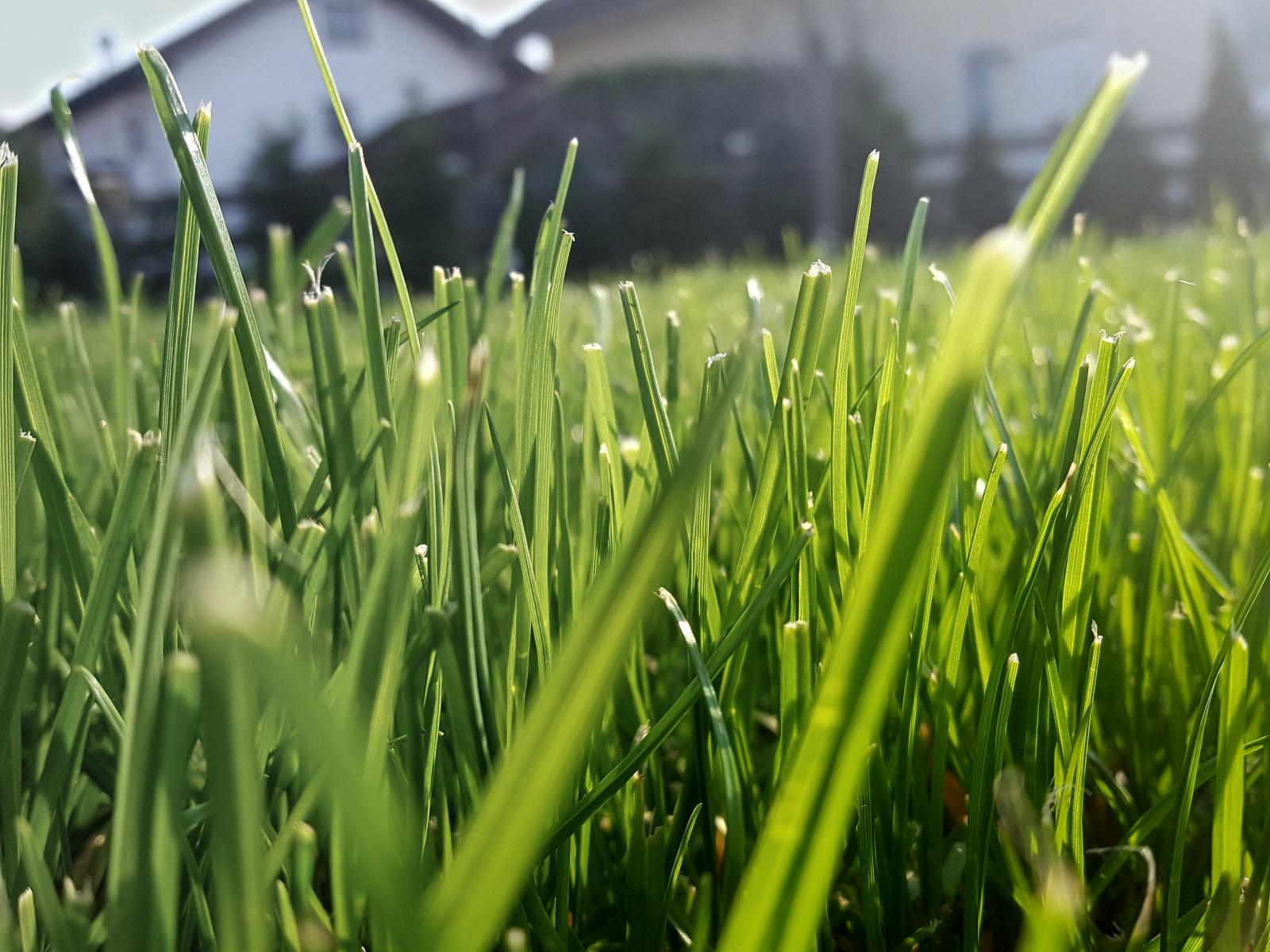 Lawn with Houses